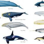 クジラとイルカの違い「実は大きさの違いだけ!?」