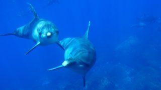 イルカ2匹が泳ぐ写真